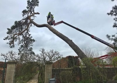 Work commences from the platform to remove branches