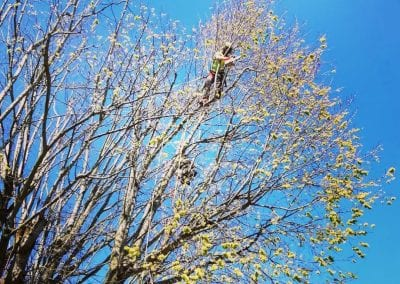 Trimming high branches